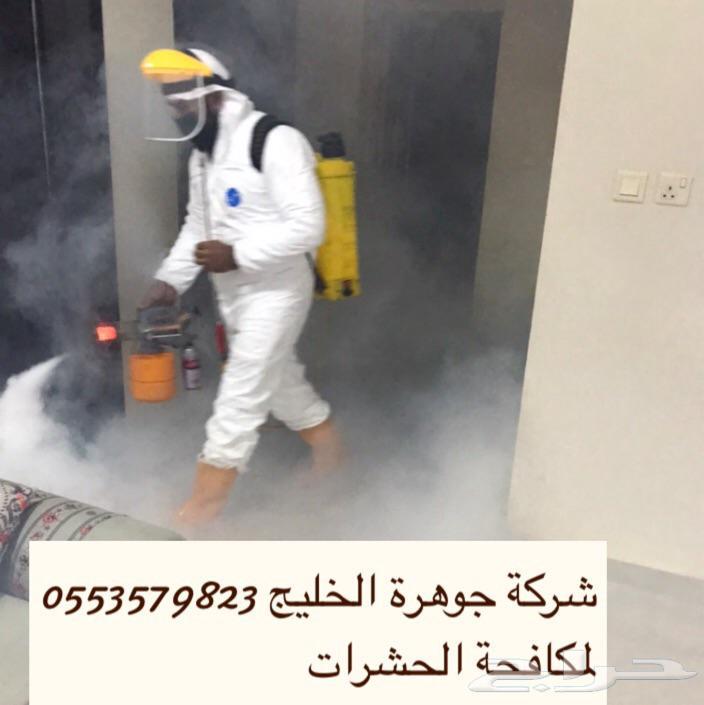 شركة مكافحة حشرات رش مبيدات رش دفان نمل ابيض