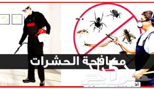 شركة مكافحة حشرات بالدمام والخبر والقطيف والجبيل