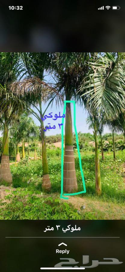 اعلان عن نخل واشنطونيا نخل عربي تصميم وتنسيق الحدائق ونجيلة