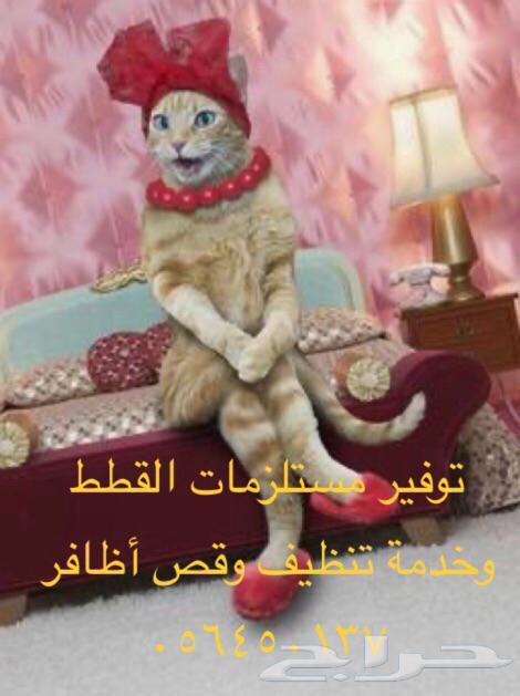 فندقه وخدمات قطط