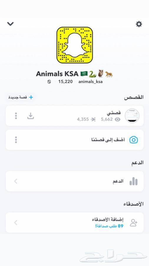 حرباء للبيع ANIMALS KSA