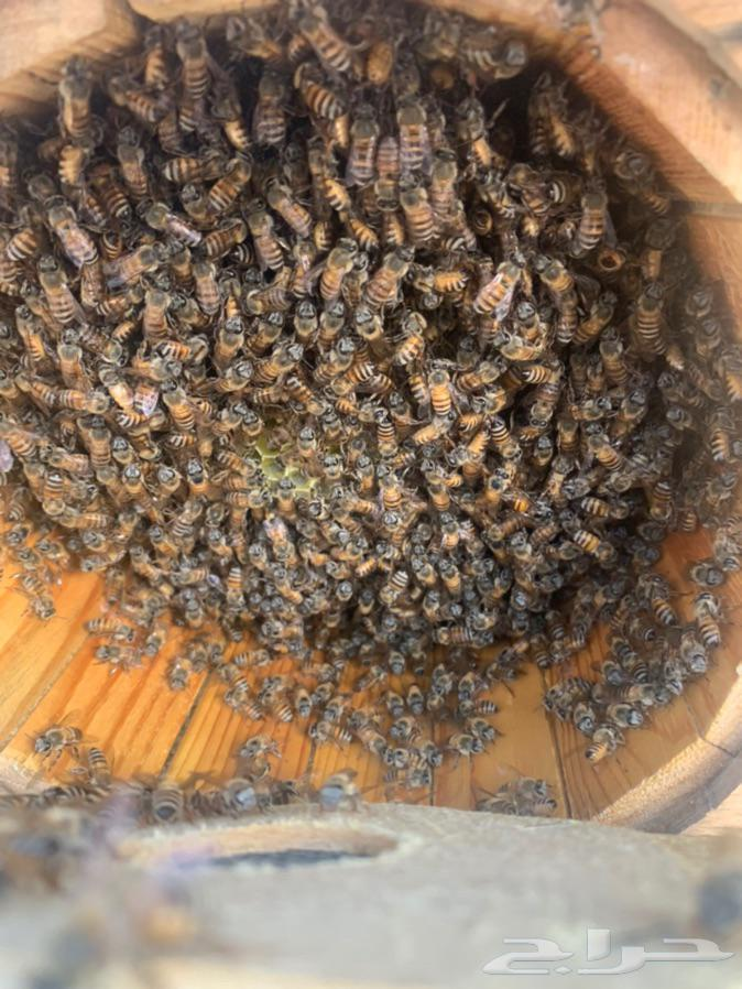 عسل من مناحل