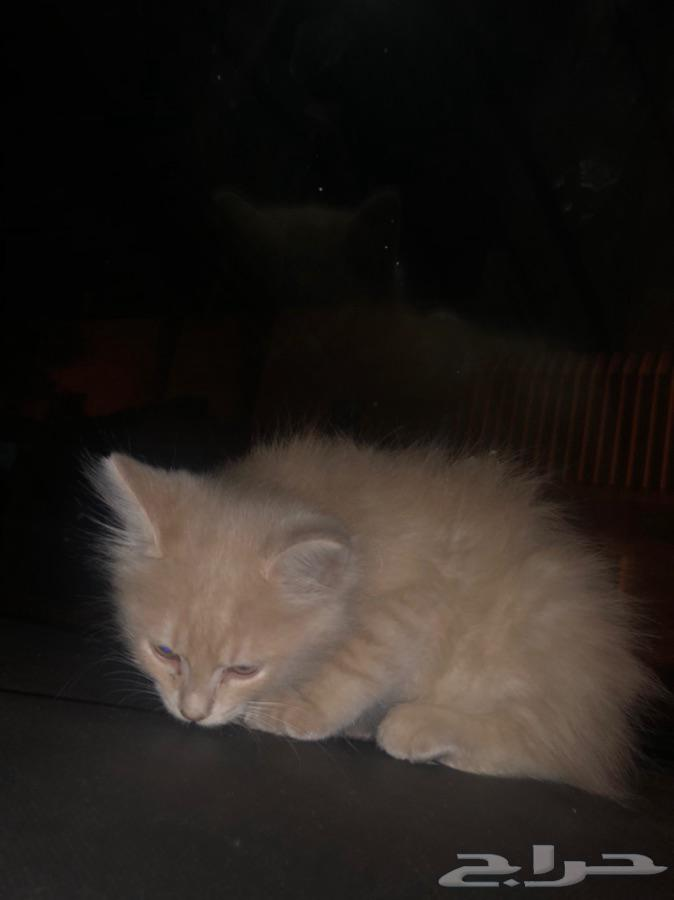 قطط اليفه