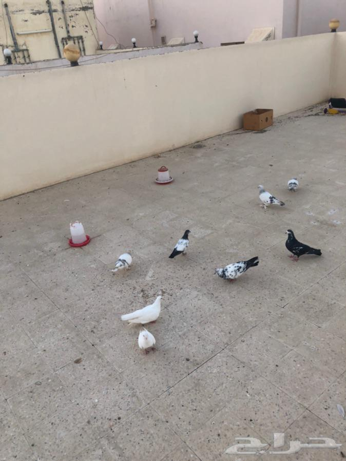 مجموعة حمام صنعاني تركي وباكستاني طيران والتركي قلب جو