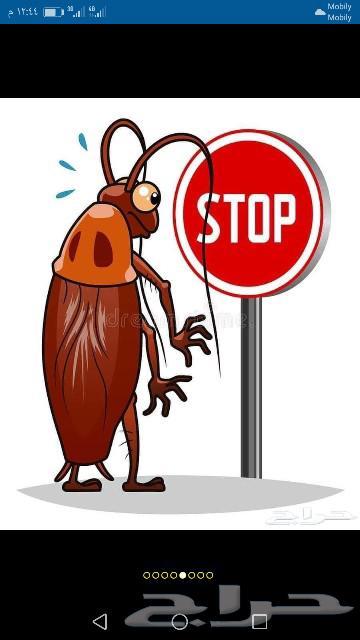 شركة رش حشرات بالمدينة المنورة مكافحة الحشرات