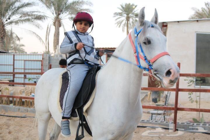 خيل تدريب خيل فروسية تعليم ركوب خيل horse riding
