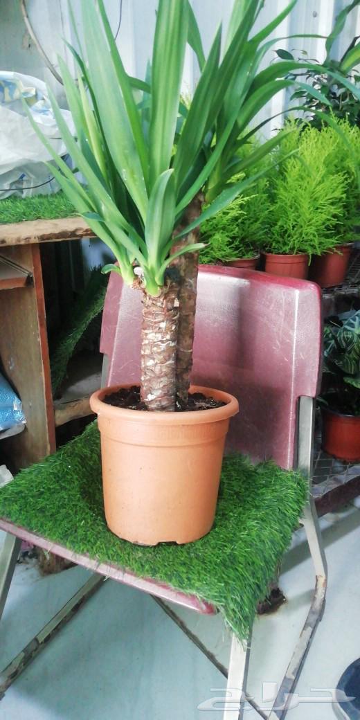 أشجار و وردود زراعه شتلات نباتات داخلية