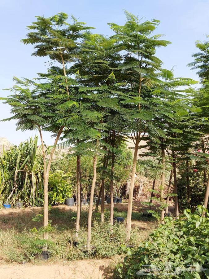 جميع انواع الشتلات والاشجار