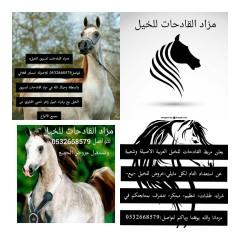 فرس حصان مهر مهره
