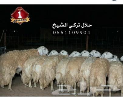 مشروع فحل حري صنف