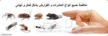 شركة رش حشرات بالمدينة المنورة مكافحة حشرات