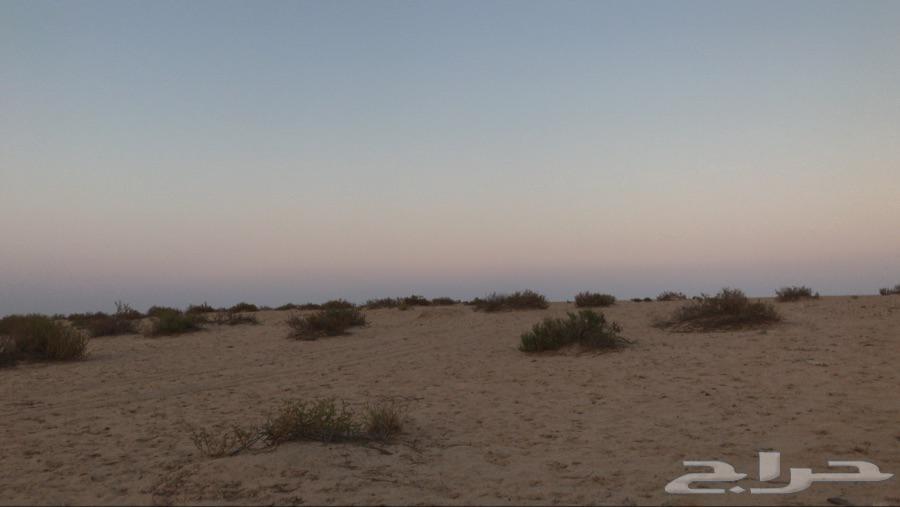 مخيم الغضا الثالث للايجار (المكان و الخيام نظيفة)