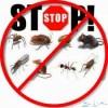 شركة رش مبيدات بالرياض صراصير نمل ابيض