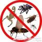 شركة رش مبيدات بالرياض صراصير نمل اسود