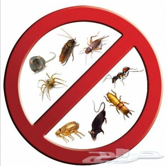 رش مبيدات مكافحة حشرات رش صراصير نمل السعر