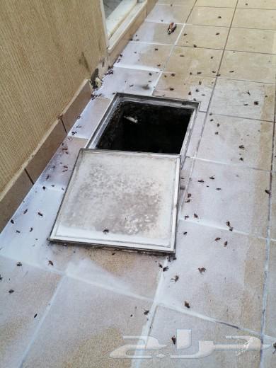 شركة رش مبيدات بالرياض شركة مكافحة حشرات