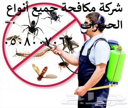 شركة مكافحة حشرات 0508007063 بالرياض