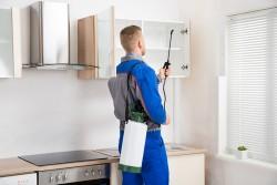 رش مبيدات مكافحة حشرات للمنازل