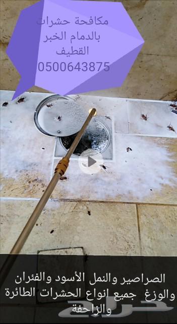 شركة مكافحة حشرات بالدمام الخبر القطيف سيهات