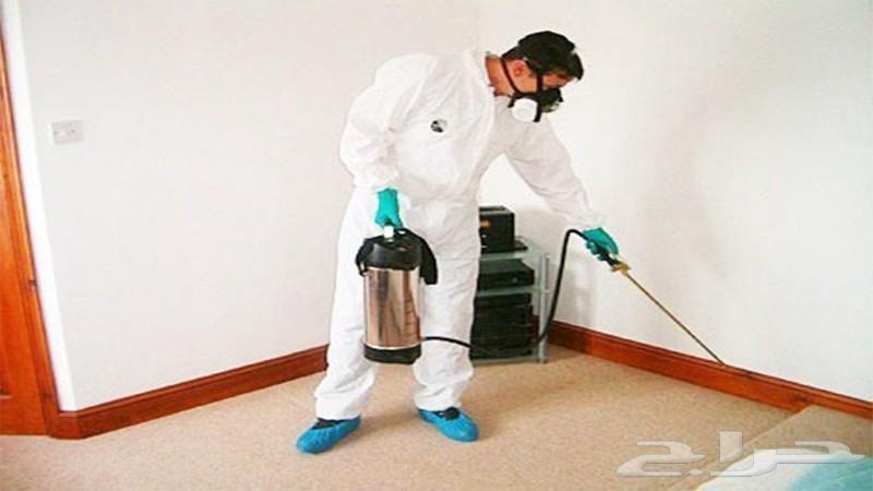 شركة مكافحة حشرات رش مبيدات مع الضمان