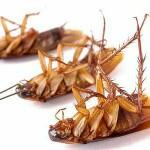 شركة مكافحة حشرات رش حشرات رش مبيدات بالمدينة