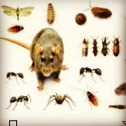 شركة رش مبيدات مكافحة حشرات