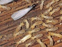 شركة مكافحة حشرات مكافحة الصراصير والنمل