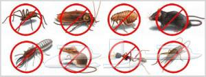 مكافحة حشرات رش مبيد رش دفان بجده  السعر