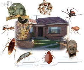 شركة مكافحة حشرات صرصير ونمل وبرص