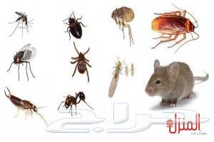 شركة مكافحة حشرات بالمنطقه الشرقية