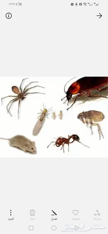 شركة مكافحة حشرات و صراصير وبق وفئران بجدة