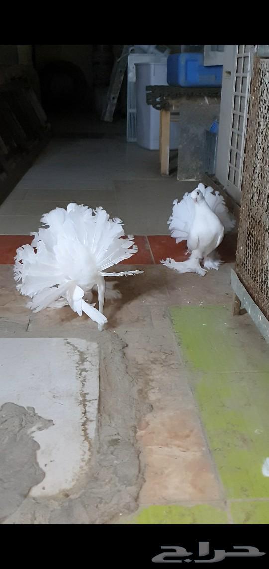 زوج رقاص هندي شباب
