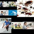 شركة مكافحة حشرات بالقطيف شركة مزايا
