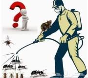 شركة مكافحة حشرات جده