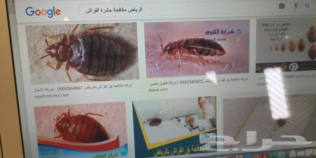 مكافحة حشرات رش مبيدات مكافحة النمل الأبيض